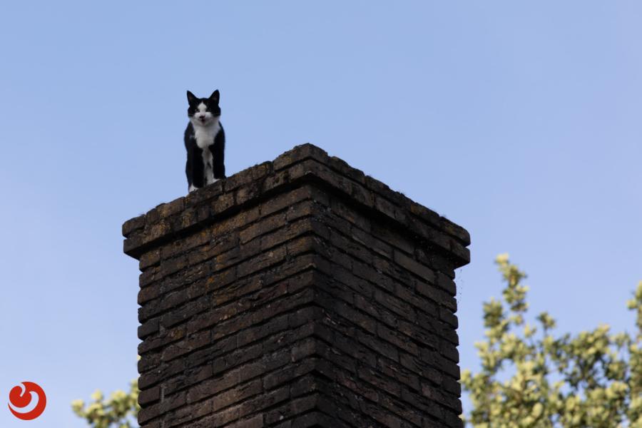 Brandweerinzet voor kat op schoorsteen