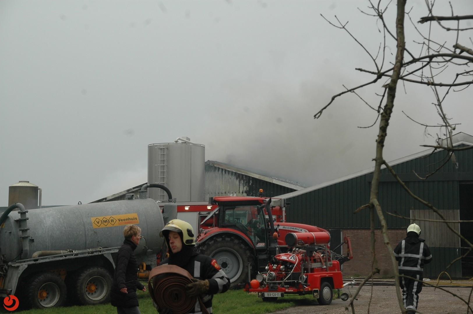 Grote brand in stal met jongvee
