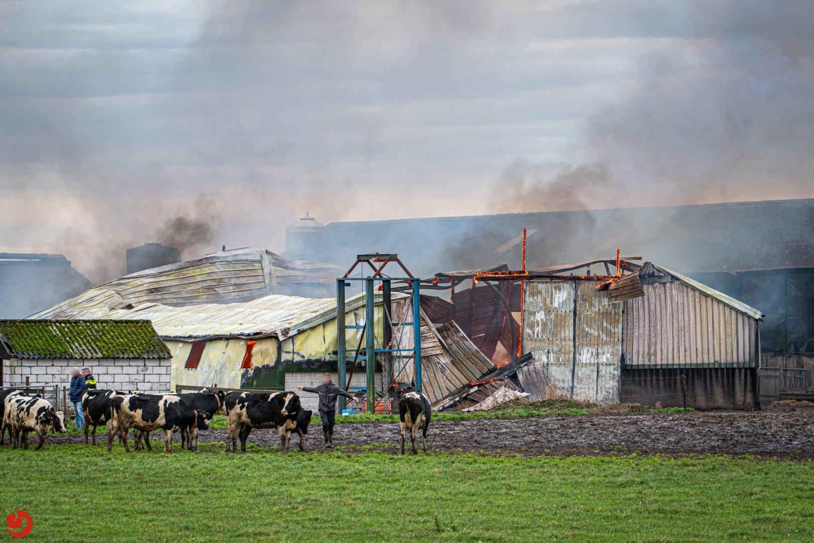 Uitslaande brand legt koeienstal in de as