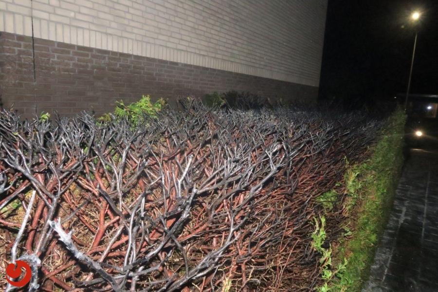Twee verdachten aangehouden voor coniferenbranden