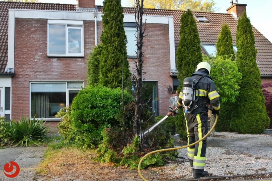 Conifeer in brand door onkruidbrander