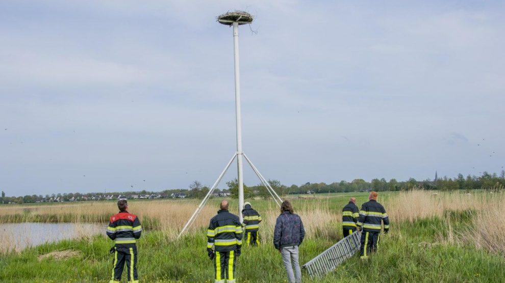 Brandweer redt jonge ooievaars uit nest