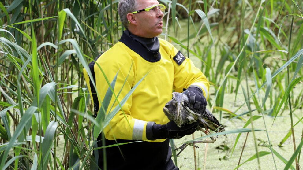 Brandweer in actie voor reiger verstrikt in visdraad