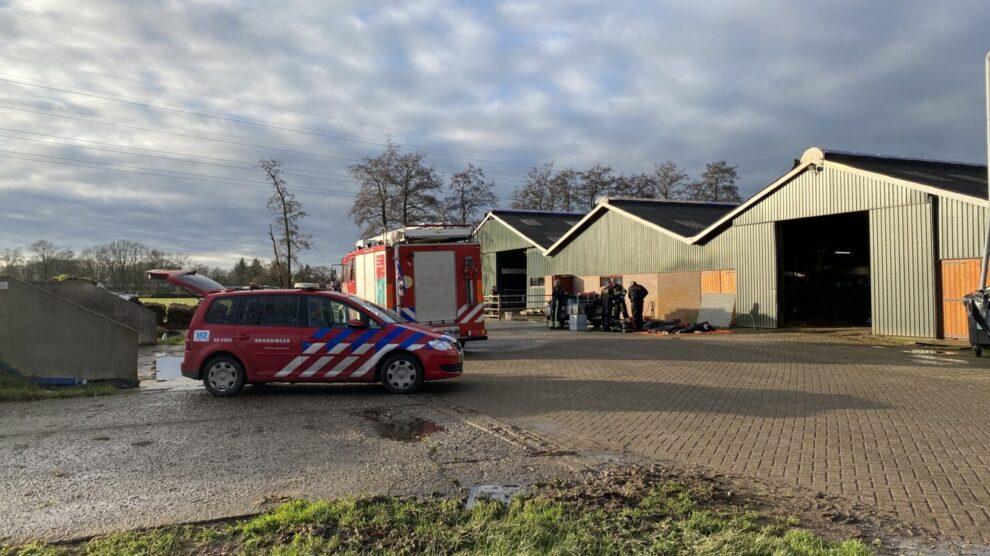 Brandweer haalt 20 koeien uit gierkelder