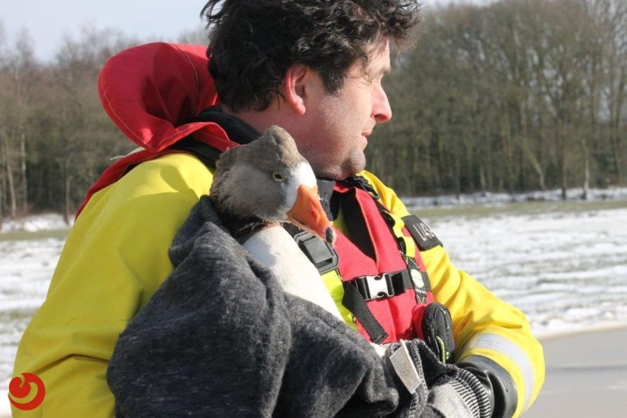 Brandweer redt gans van het ijs