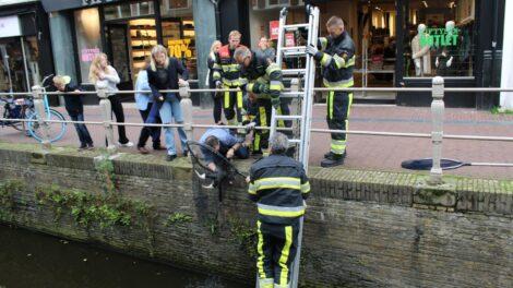 Kat in het nauw op het Naauw in Leeuwarden